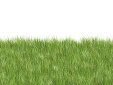Free Soft Grass Royalty Free Stock Photos - 5221598