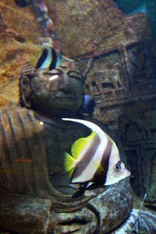 Free Aquarium Royalty Free Stock Image - 5221736