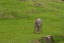 Free Photograph Of A Zebra Stock Photography - 5222242