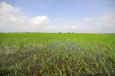 Free Ayapel Swamp_64 Stock Photo - 5222310