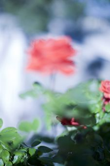 Free Blurred Rose Stock Photos - 5222523