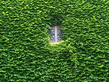 Free Chinese Traditional Windows In Leaves Royalty Free Stock Photo - 5222685