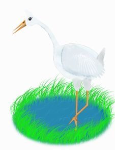 Free White Stork Stock Photo - 5222810