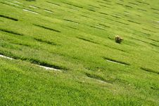 Free Cemetery Lawn Royalty Free Stock Photo - 5223705