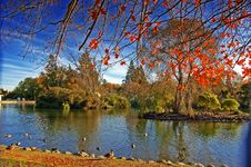 Free Duckpond Royalty Free Stock Photo - 5224065