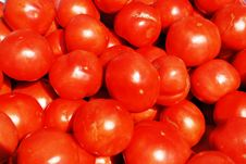 Free Tomatoes. Royalty Free Stock Photo - 5224175