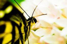 Free Butterfly Stock Images - 5225324