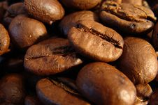Free Coffee Beans Royalty Free Stock Photography - 5225447