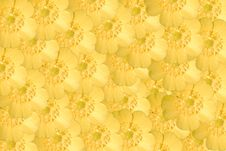 Free Buttercup Stock Image - 5225821