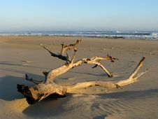 Driftwood And Sea Royalty Free Stock Images