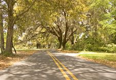Free Road Under Sun Dappled Oaks Stock Photography - 5226612