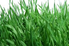 Free Grass Stock Images - 5227114