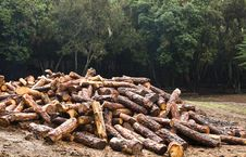 Free Deforestation Royalty Free Stock Images - 5228019