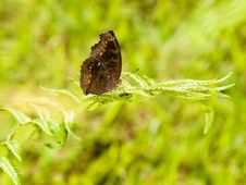 Butterfly On Frond Of Fern Stock Photography