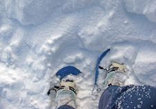 Free Snow Shoes Royalty Free Stock Image - 5229256