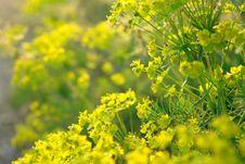 Free Yellow Flowers Stock Image - 5229991