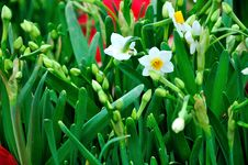 Free Chrysanthemum Flowers Royalty Free Stock Photos - 52294378