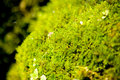 Free Green - Yellow Moss Stock Photo - 5231010
