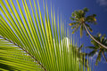 Free Palm Frond With Trees Royalty Free Stock Images - 5233019