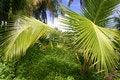 Free Palm Trees In Tahiti Royalty Free Stock Image - 5233216