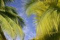 Free Palm Trees In Tahiti Royalty Free Stock Image - 5233226