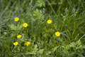 Free Flowers In The Tussock Stock Photo - 5234290