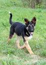 Free Fun Young Running Dog Royalty Free Stock Photos - 5234508