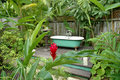 Free Bath Tub In The Rainforest Stock Photography - 5237822