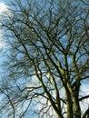 Free Looking Upward To Tree Stock Photos - 5238993