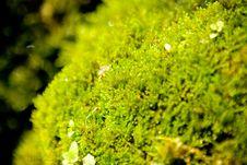 Free Green - Yellow Moss Stock Photo - 5231010
