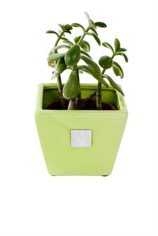 Free Plant In A Pot Royalty Free Stock Image - 5231246