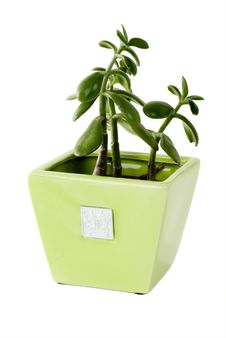 Free Plant In A Pot Stock Photo - 5231250