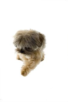 Free Cute Puppy Royalty Free Stock Image - 5231356