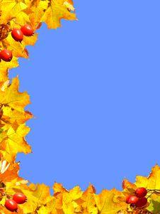 Free Autumn Frame Stock Photography - 5232072