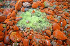 Free Mossy Carpet On Rocks Royalty Free Stock Image - 5232196