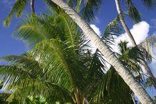 Free Palm Scene Stock Photography - 5233022
