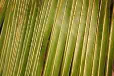 Free Palm Fronds At Sunset Royalty Free Stock Photos - 5233048