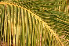 Free Palm Fronds At Sunset Royalty Free Stock Photography - 5233057