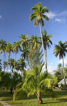 Palm Trees In Resort Royalty Free Stock Images