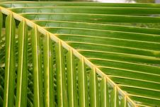 Free Palm Fronds Stock Photos - 5233213