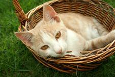 Free Kitten Stock Photo - 5235260