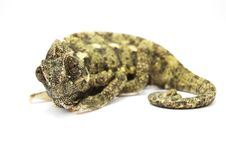 Free Chameleon. Stock Photo - 5235920