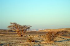 Free Desert Landscape Royalty Free Stock Photography - 5236227