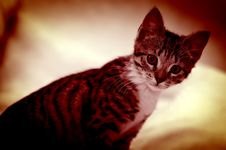Free Cat Portrait Royalty Free Stock Photography - 5236347