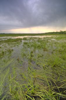 Free Swamp With Stormy Clouds Stock Image - 5236661