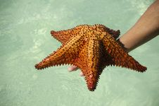 Free Red Starfish Stock Image - 5236841