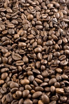 Free Nice Brown Coffee Beans Stock Images - 5236904