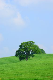 Free Tree In A Field Against A Blue Sky Royalty Free Stock Images - 5237389
