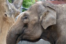 Free Close-up Of Elephant Stock Photography - 5238412