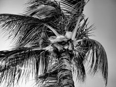 Free Palm Tree In Wind Stock Images - 5239234